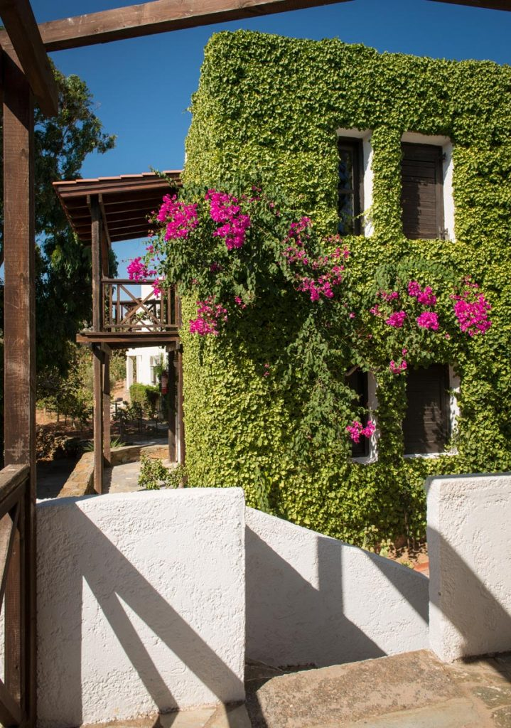 ambelos apartments nature peacefulness double apartments agia pelagia crete greece cretan hospitality